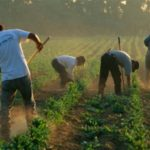 Сезонные работники и их работодатели: новые положения в законе-флюсси